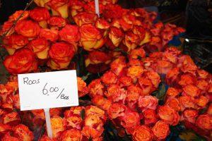 amsterdam-roses-feu