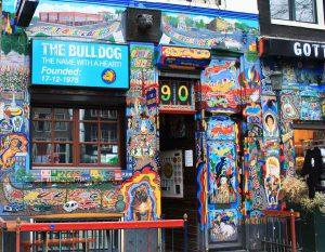 amsterdam-the-bulldog-couleur
