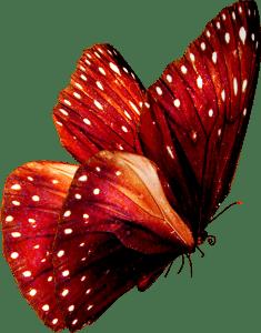 papillon-rouge